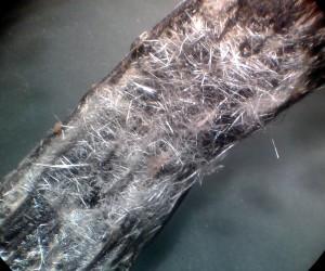 Cristalli di vanillina su un baccello di vaniglia, 10 ingrandimenti