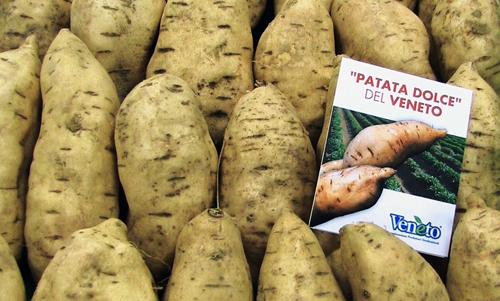 Patate americane del tipo che si trovano qui